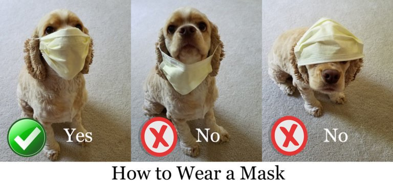 Proper Mask Wearing
